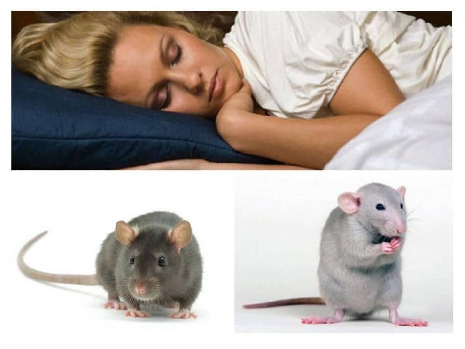 Крыса во сне беременной женщины - хороший знак.