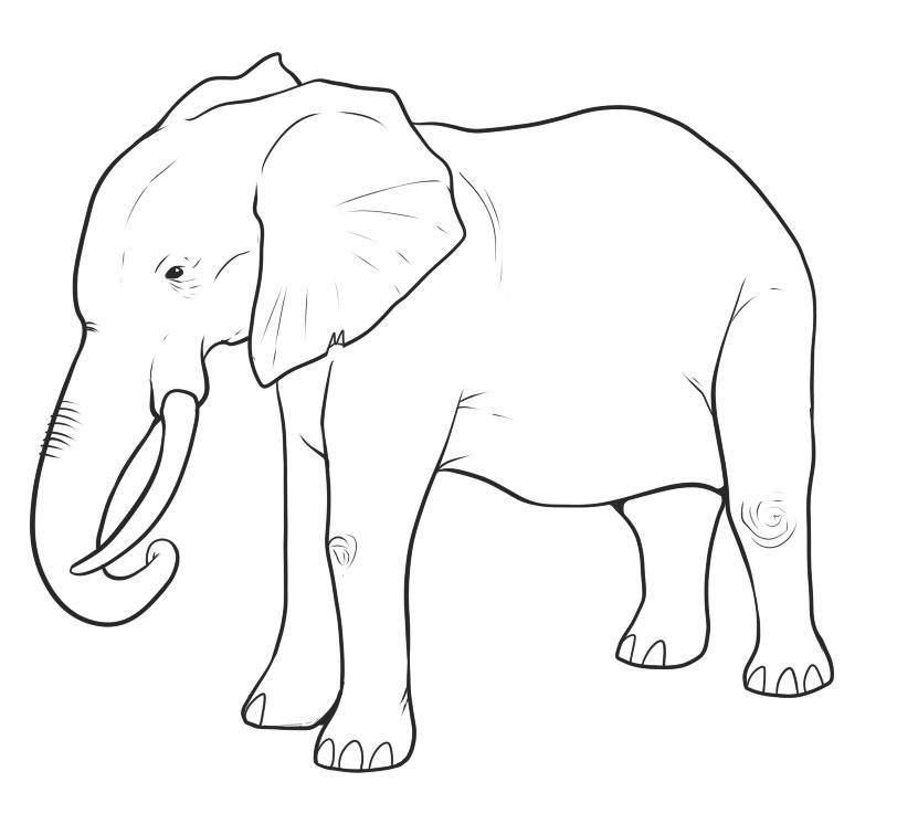 gotovii-risunok Как нарисовать слона поэтапно: 5 вариантов как легко и просто нарисовать слона карандашом