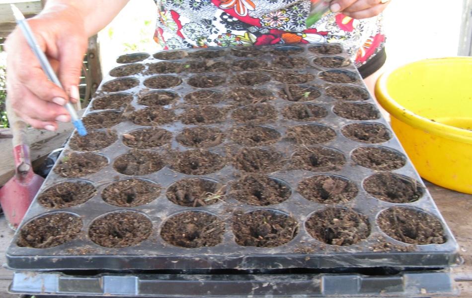 Контейнеры для посева семян на рассаду