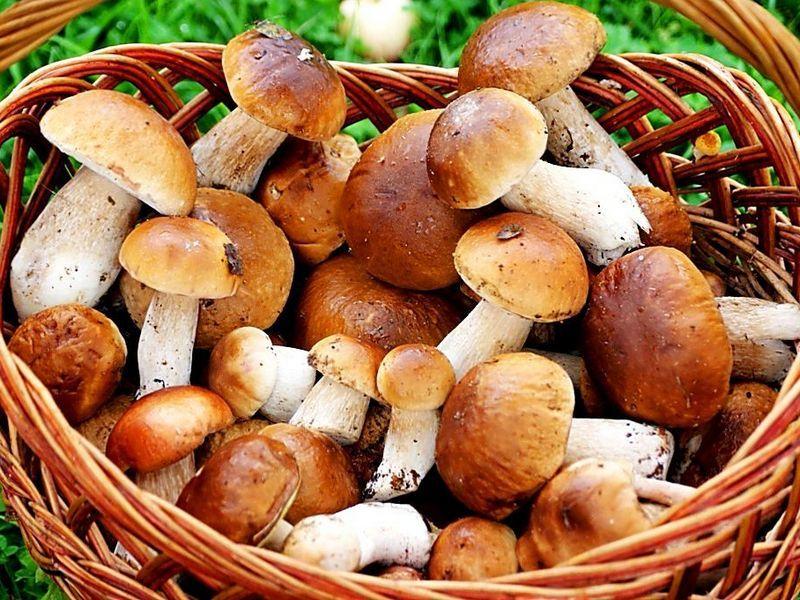 В грибах содержатся витамины для остроты зрения