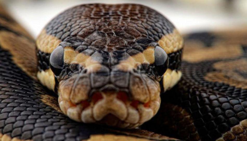 Сон, в котором посчастливилось убить кусающую змею, пророчит победы наяву.
