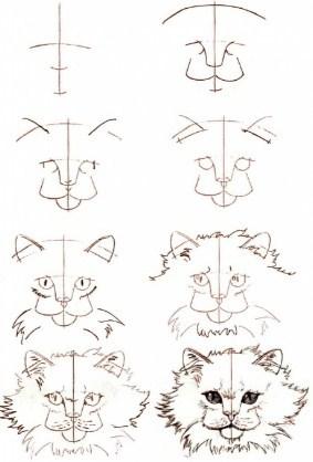 realistichnii-kot Как нарисовать котенка карандашом поэтапно для начинающих и детей? Как нарисовать котенка аниме с милыми глазками, мордочку котенка?