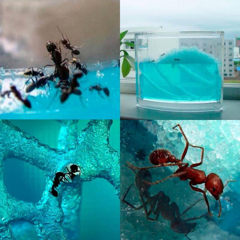Гелевая муравьиная ферма