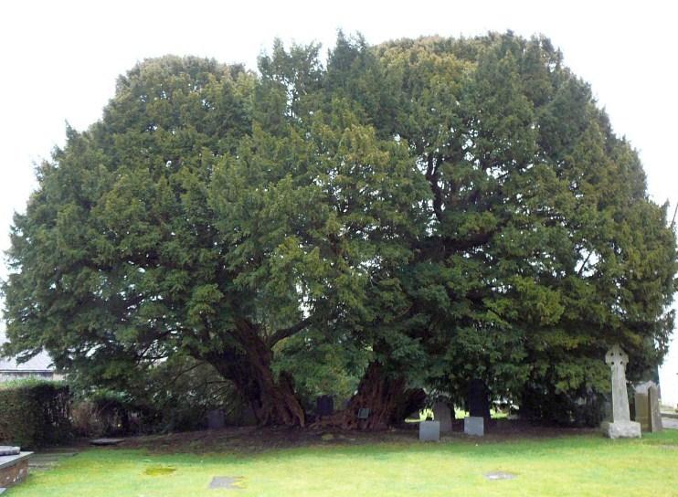 Дерево с большим количеством легенд
