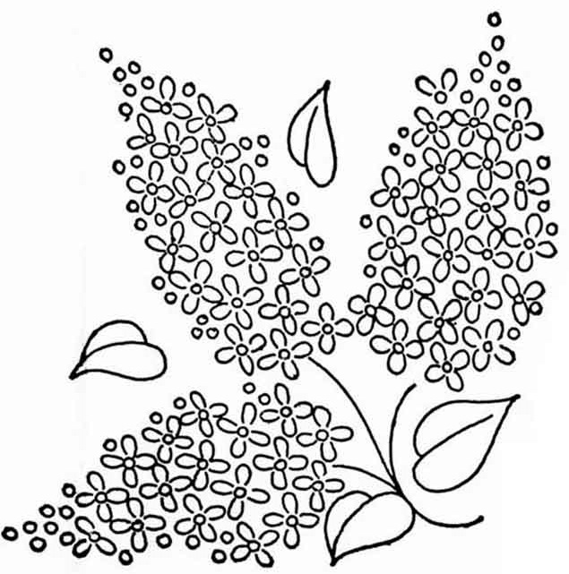 Раскраска цветки сирени