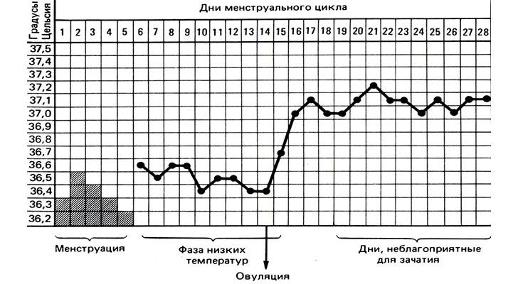 График температуры перед месячными