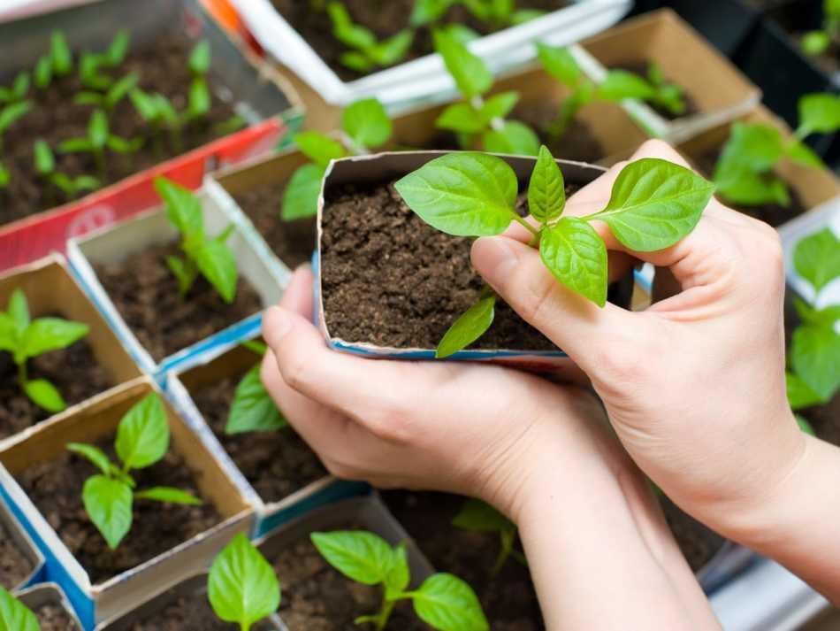Применение средств для обработки растений