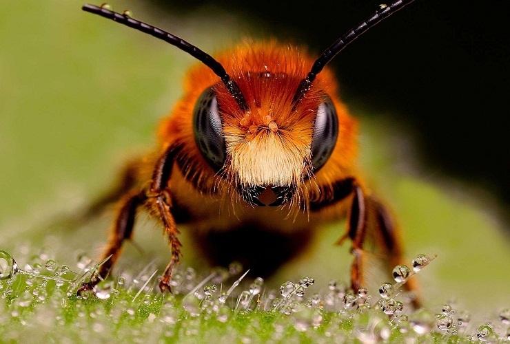 Фрейд провел аналогию пчелы с мужским половым достоинством