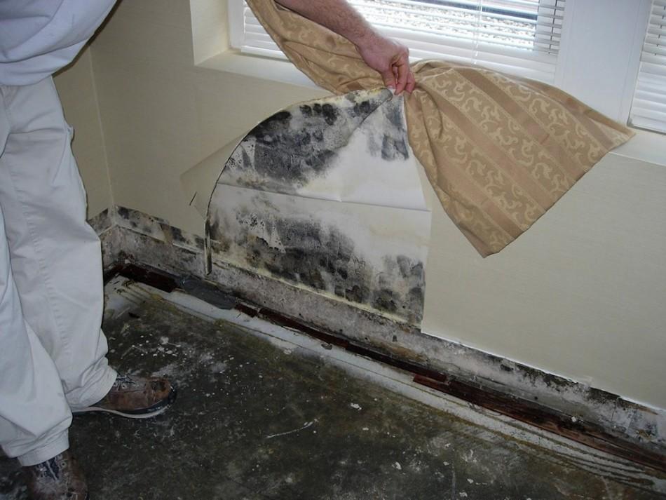 Поддержание чистоты и гигиены - профилактика появления плесени в ванной и доме.