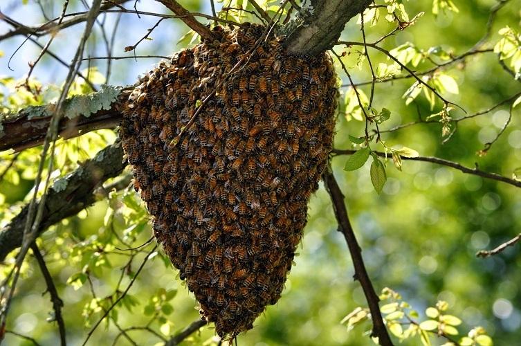 Пугающий пчелиный рой советует присмотреться к окружению