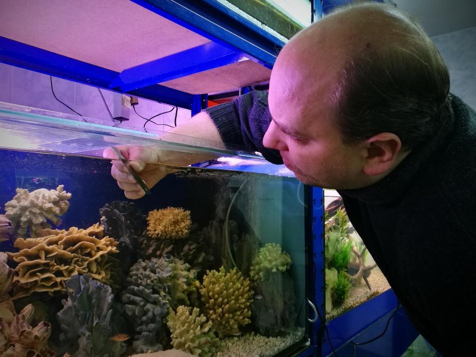 Чистка стекла аквариума