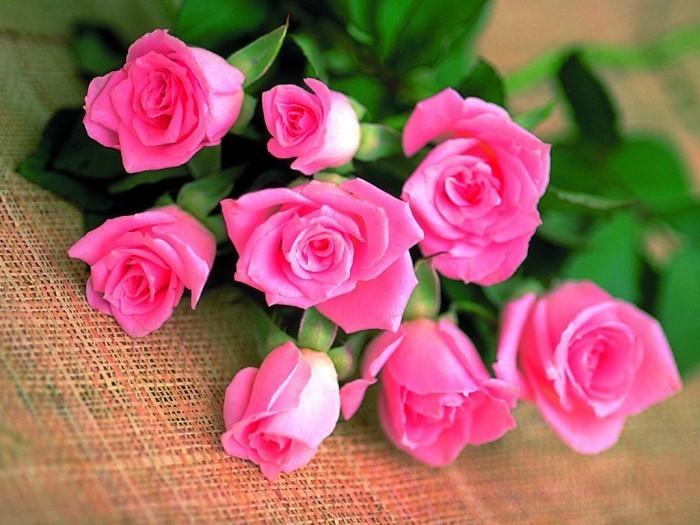 Цветы - прекрасный подарок к любому празднику