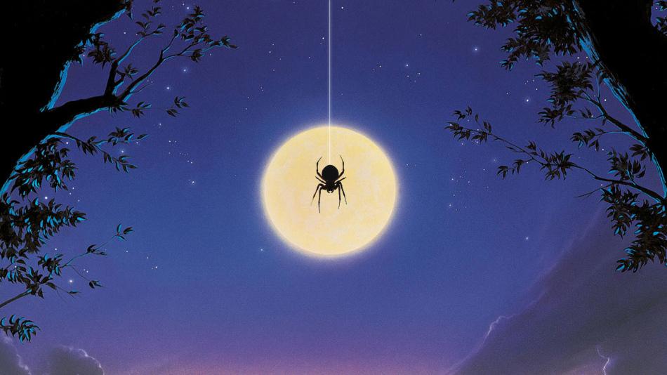 Коричневый паук в доме
