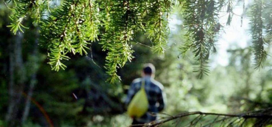 Для мужчины оказаться во сне в лесу - к усилению сексуальности.