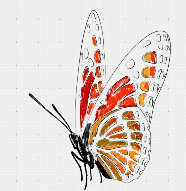 nachinaem-razukrashivat-babochku Как нарисовать 3д (3d) рисунок на бумаге карандашом