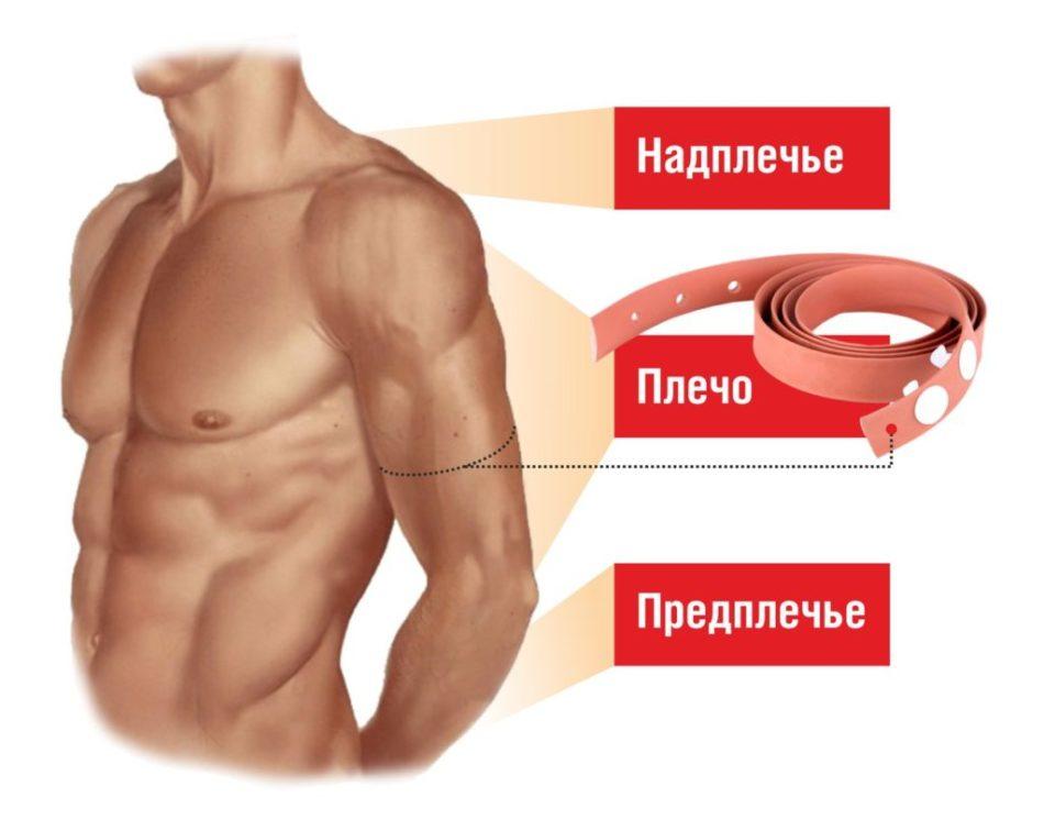 Схематическое разделение надплечье, плеча и предплечья