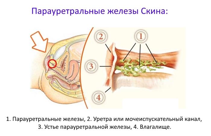Доведение до оргазма смотреть, интим фото звезд узбекистана