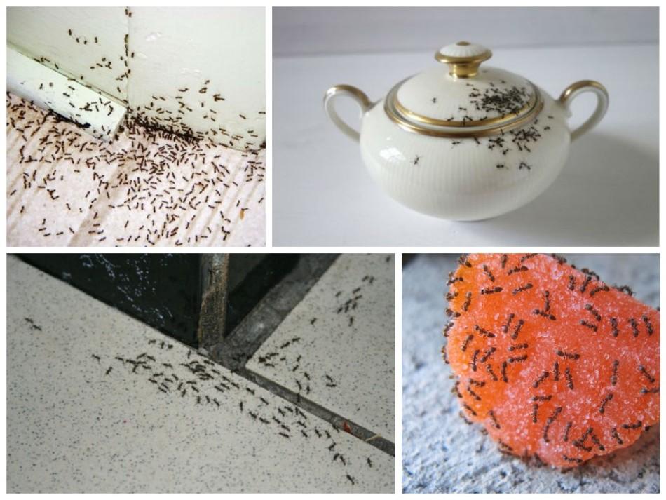 Устранение муравьев с помощью пищевой соды