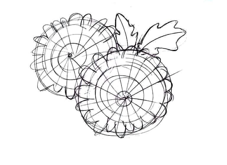 Как нарисовать букет хризантем: прорисовывание контура соцветий