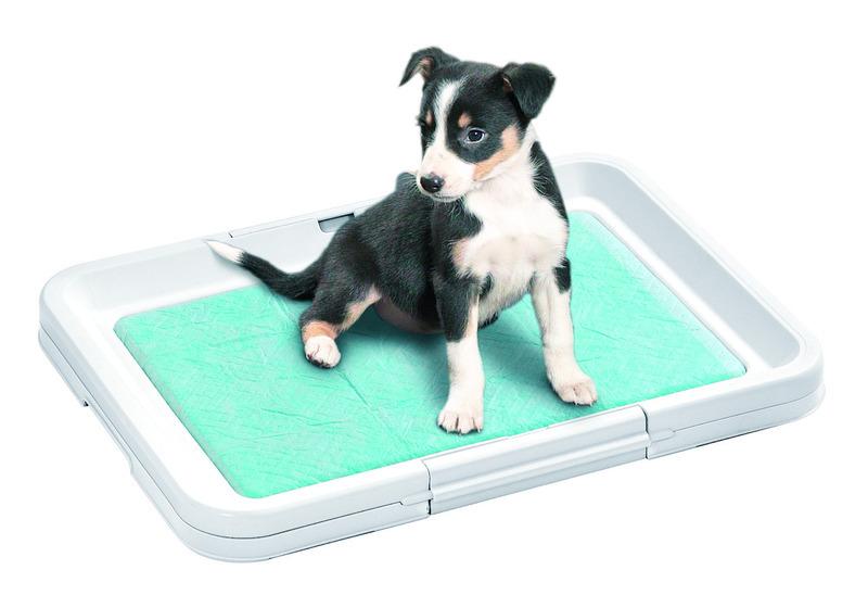 Как приучить собаку к туалету (1)