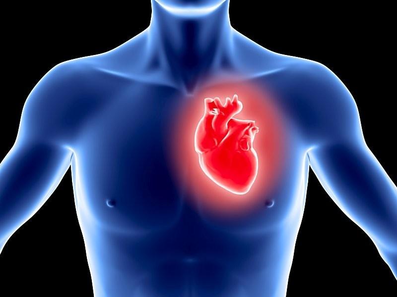 Показатели давления и работа сердца взаимосвязаны