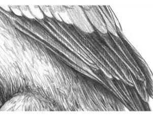 dobavim-diagonalnie-linii-na-otdelnie-perya Как рисовать сову карандашом поэтапно для начинающих и детей? Как рисовать по клеточкам сову, красками?