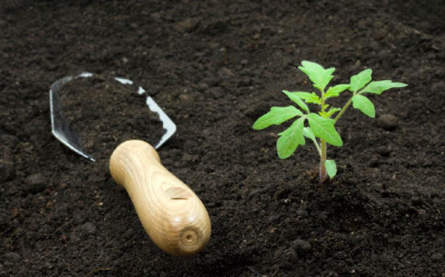 Только на мощных грунтах можно получить мощный урожай
