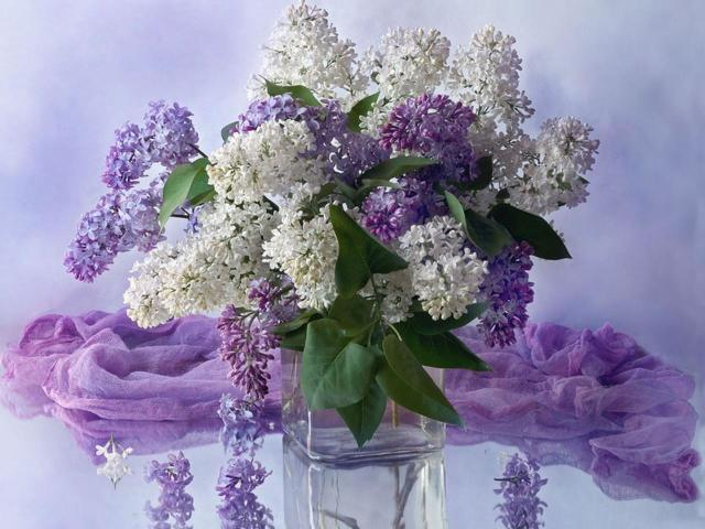 http://heaclub.ru/tim/b26207c6b428fae562b8a339b5d58f63.jpg