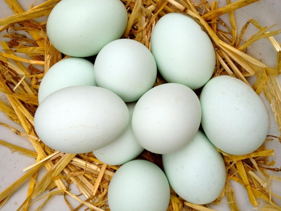 Сколько минут варить утиные яйца?