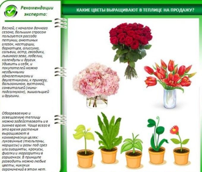 Выращивать можно любые цветы