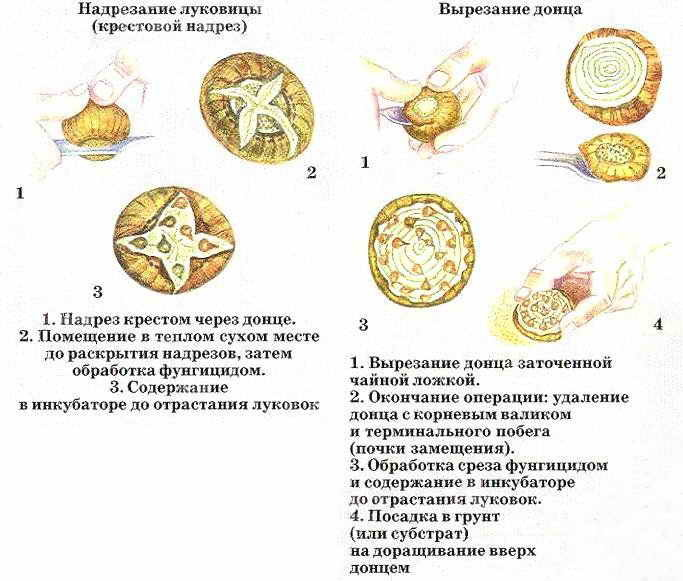 Методы размножения