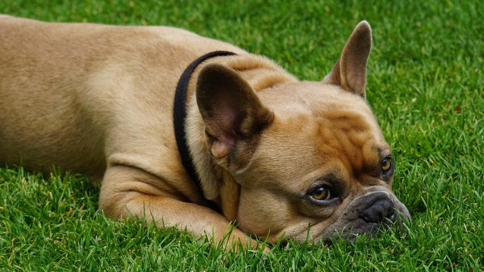 Мазь ям бк для собак вернет идеально чистые покровы вашей собаке