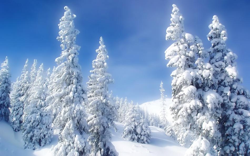 Зимний лес во сне предвещает свершение чудес наяву.