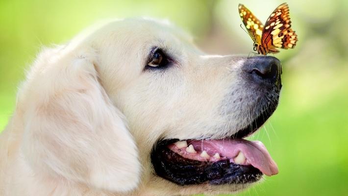 Здоровая собака, которая не пахнет и не линяет