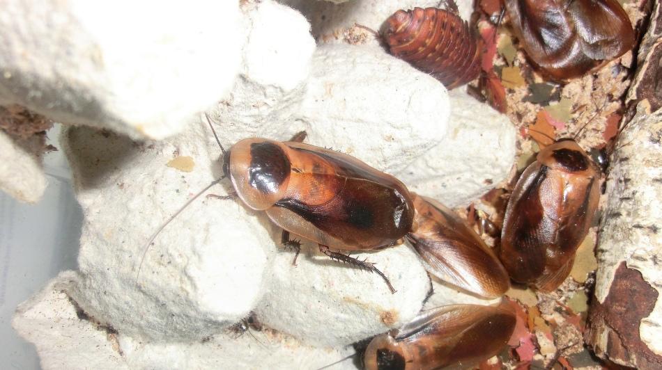 Сон, в котором тараканы, жуки и пауки находились все вместе, пророчит проблемы и неприятности.