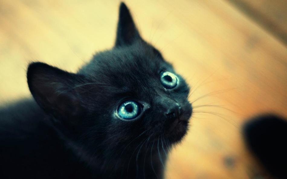 Черная кошка — символ необъяснимого и магического