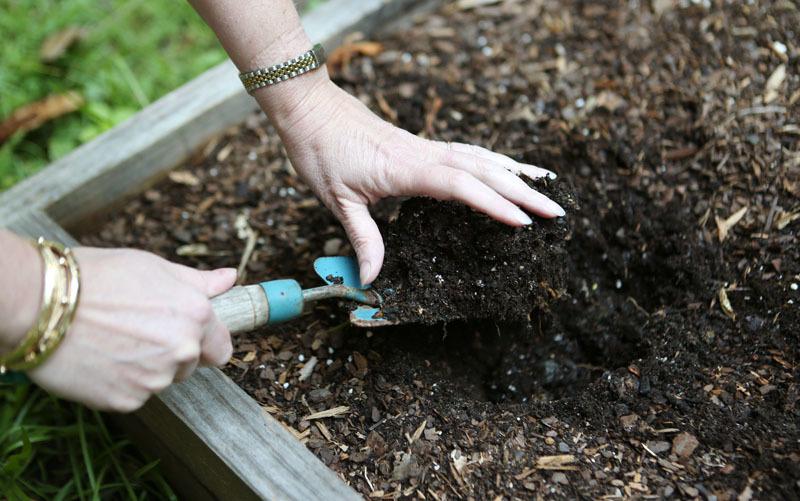 Весенняя подготовка грунта под засев рассады цветной капусты