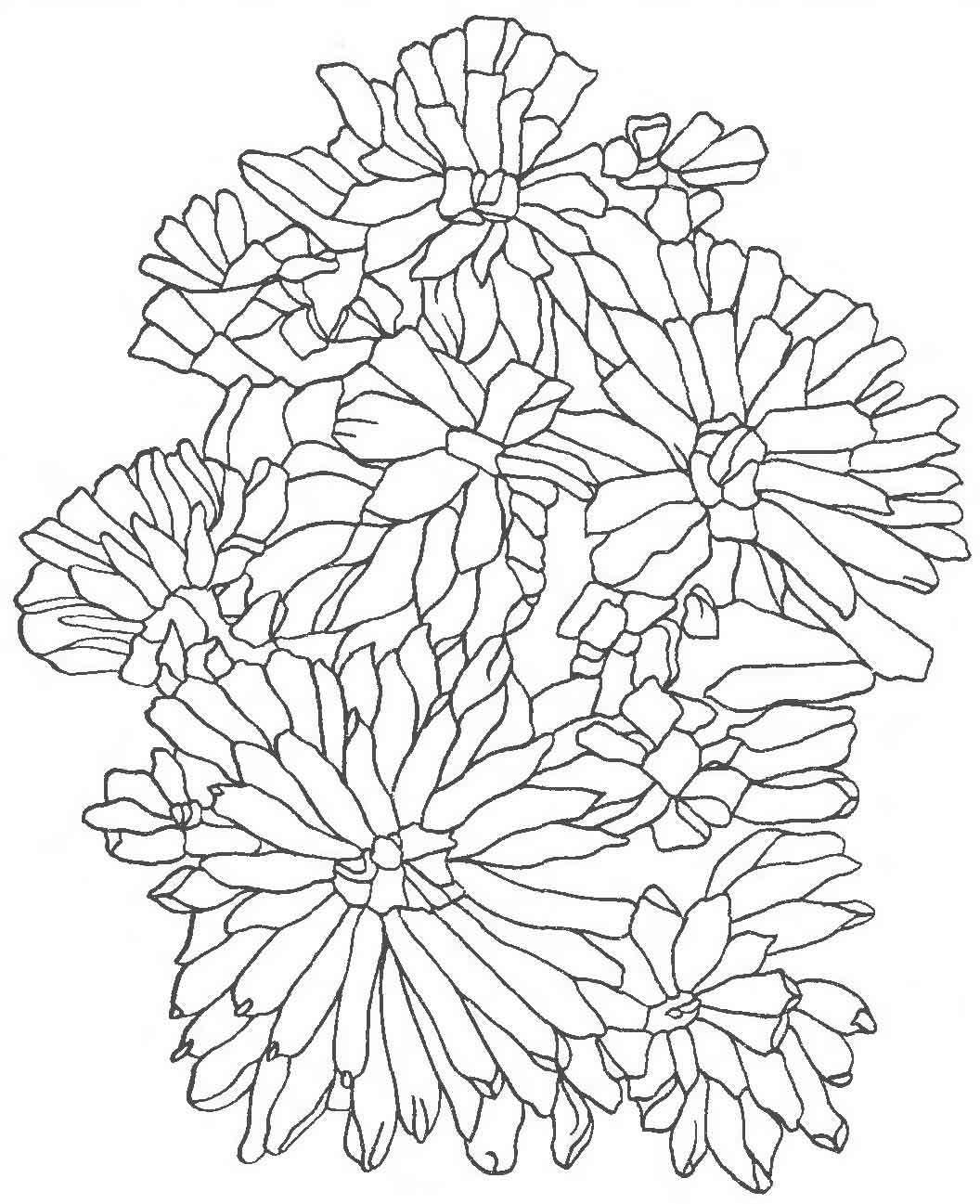 shablon-dlya-vishivki-lentami-astri Вышивка лентами для начинающих. Схемы цветов