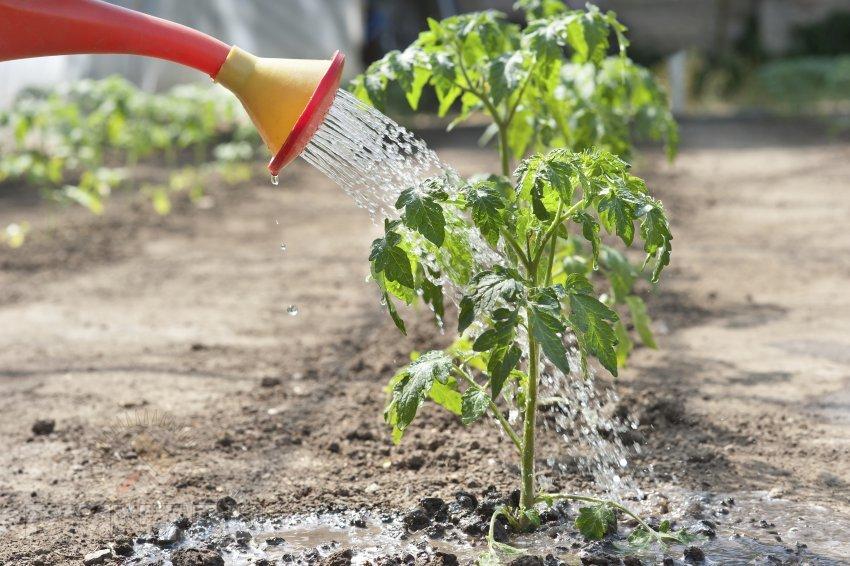 Фитоспорин для овощных культур
