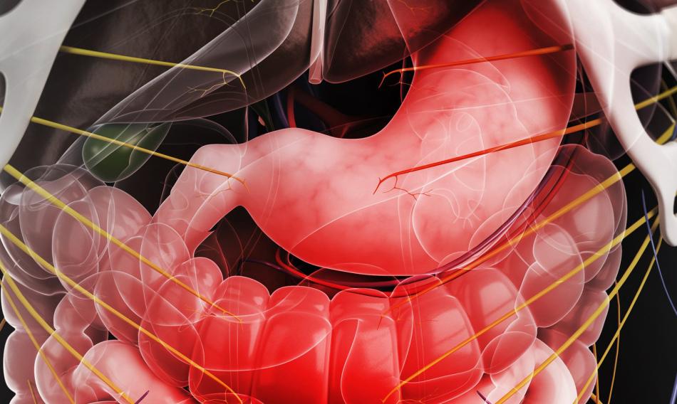 Расшифровка и норма анализа на панкреатическую эластазу