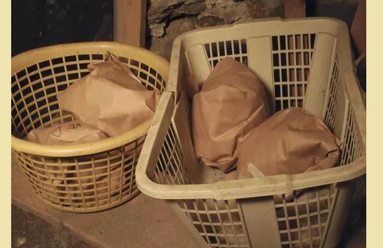 Правильное хранение капусты брокколи в погребе, чтобы она не пожелтела
