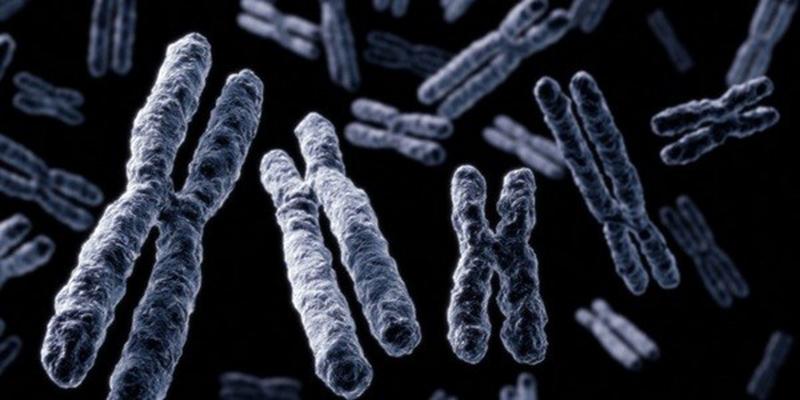 Хромосомы {amp}quot;х{amp}quot; и {amp}quot;y{amp}quot;