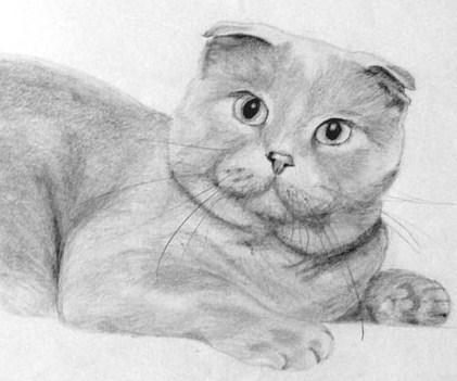 dorisuite-lapi-i-tulovishe Как нарисовать котенка карандашом поэтапно для начинающих и детей? Как нарисовать котенка аниме с милыми глазками, мордочку котенка?