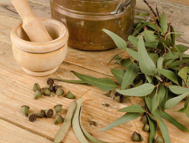 Масло эвкалипта в гинекологии рецепты