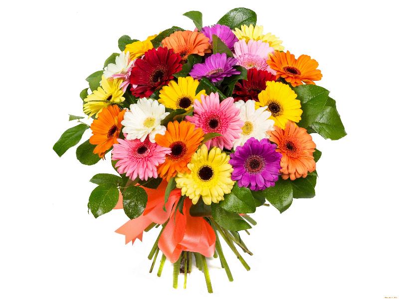 Герберы органично сочетаются с другими цветами в одном букете