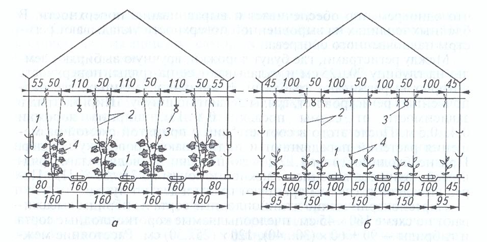 Схема посадки огурцов в теплице