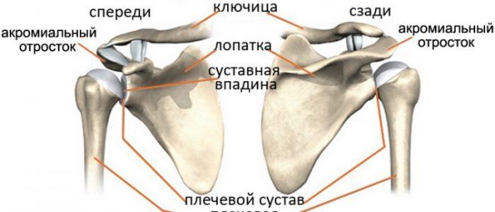 Акромиально-ключичный узел