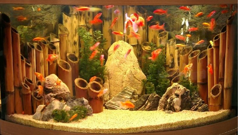 картинки декорации в аквариум сухого чая сладкий