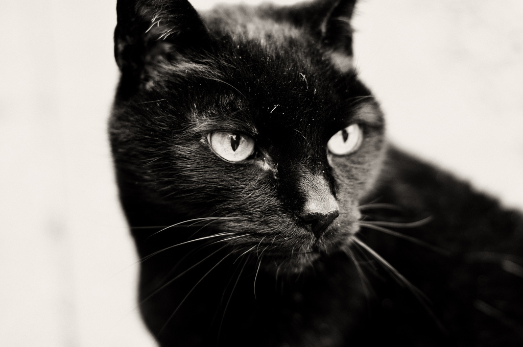 Характеристика кошки