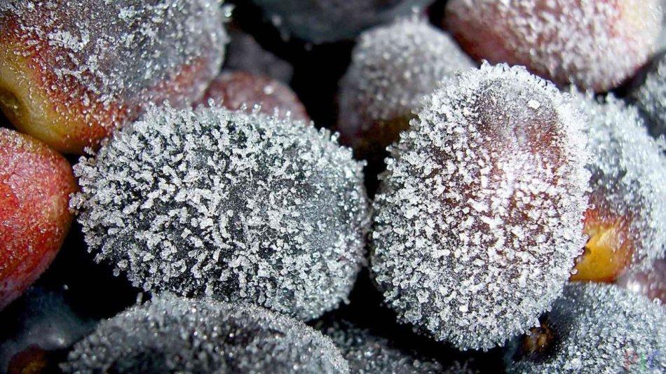 Ягоды винограда покрыты инеем